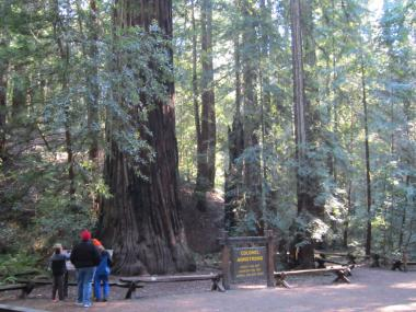 Armstrong Redwood SNR /Sonoma, CA-11, 2014-1,6