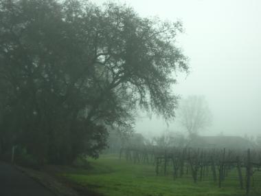 ワインの旅  Sonoma Valley その1-1, 2014-1-6