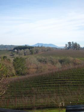 Iron Horse Vineyards / Sabastopol, CA-6, 2014-1-7