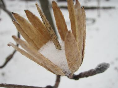 Snow Day!! -6, 2015-2-16