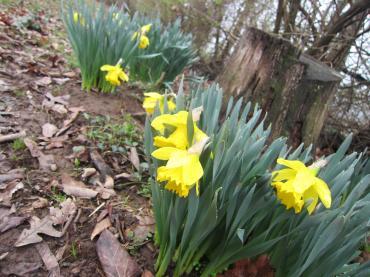 ただいま♡アーカンソーとFirst Day of Spring-6, 2015-3-20