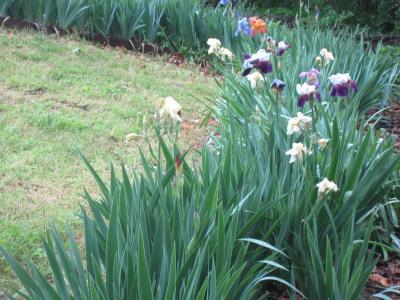 雨上がりの庭から-1, 2-15-5-7