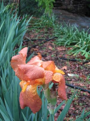 雨上がりの庭から-3, 2-15-5-7