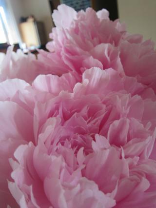 恋は花盛り-2, 2015-5-20