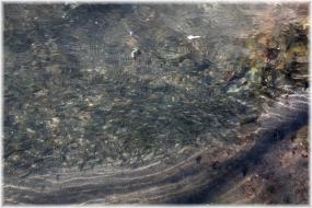 141228E 023魚@泉の森32