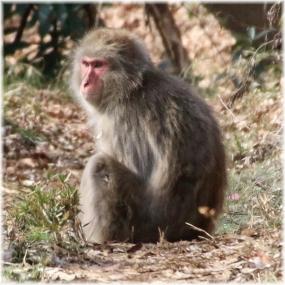 150228E 021猿B-SQ