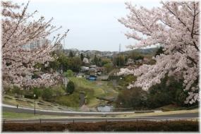 150404E 042桜と上谷戸32