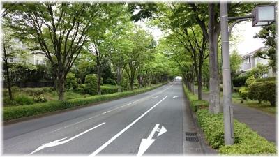 150429J 246緑山けやき通り169