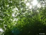 チロルの森15 (1)
