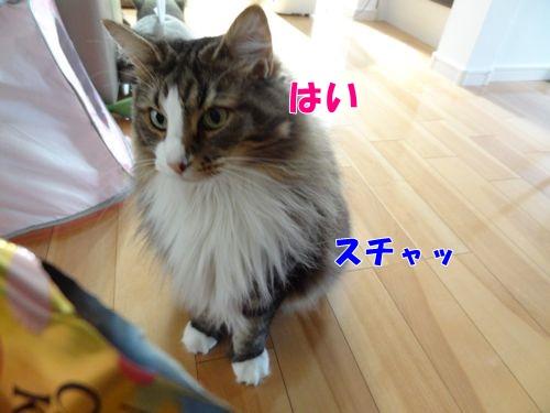 2015051205t.jpg