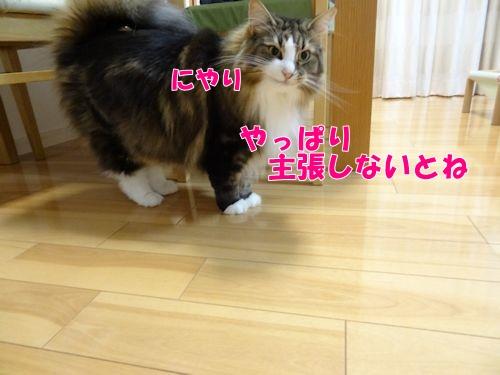 2015052609t.jpg