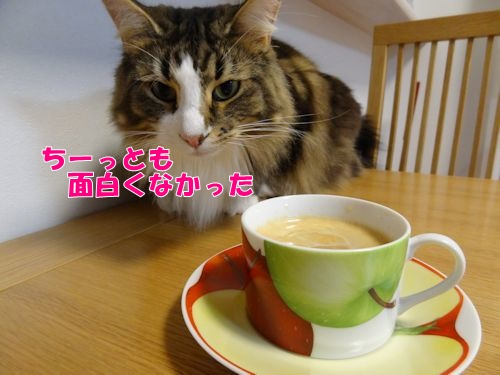 espresso0511_text.jpg