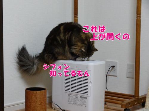 kashitutank8_text.jpg