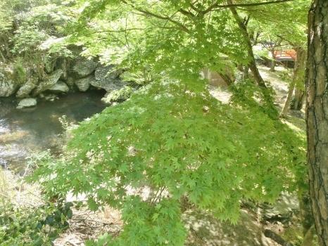 観音寺奥の院 (7)
