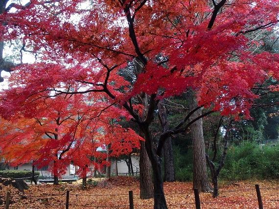141201常盤神社-1