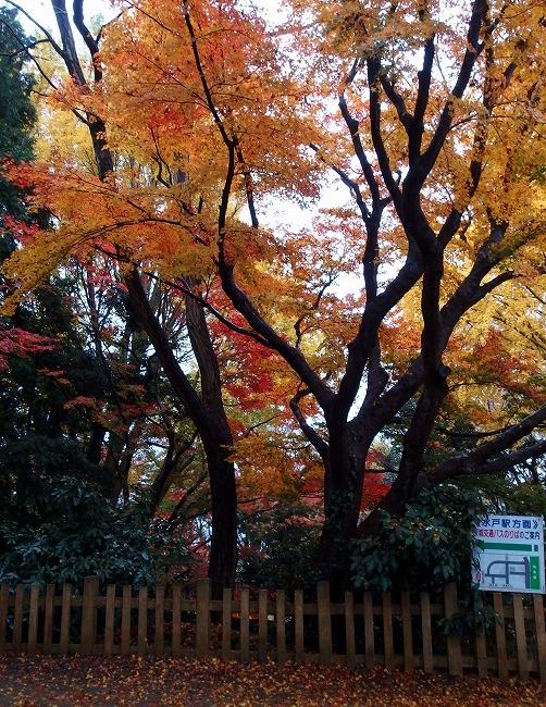 141201常盤神社-2