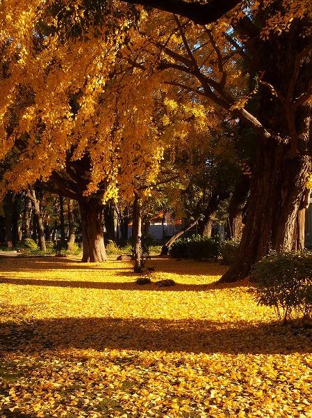 141202上野公園-2
