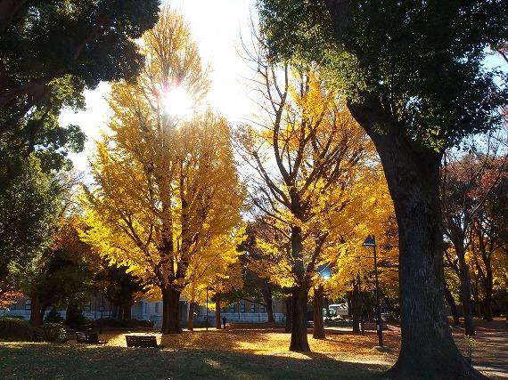141202上野公園-4