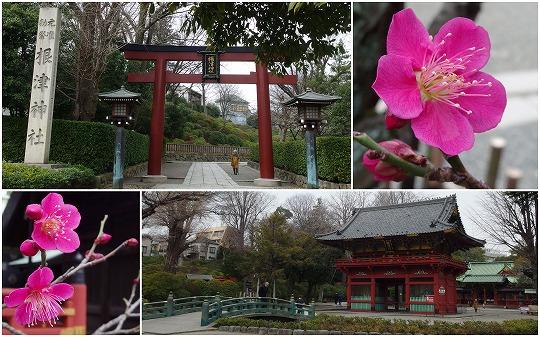 150225根津神社