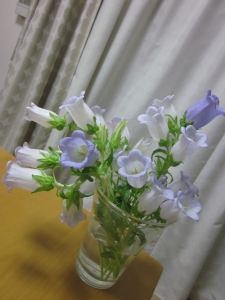 IMG_7658.jpg