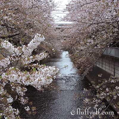 神田川2015
