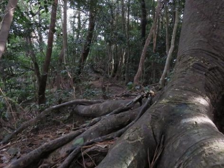 金中山バルーン 243