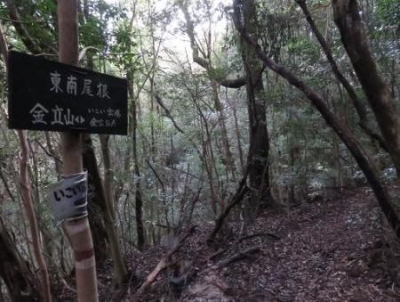 金中山バルーン 235