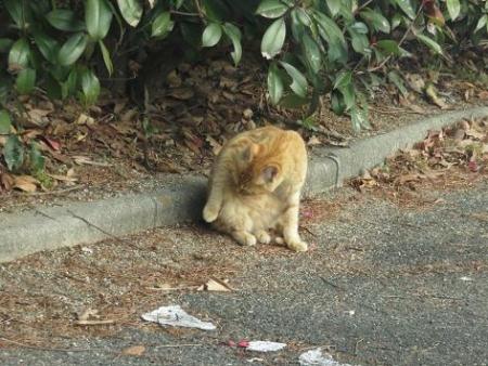 野良ネコと野鳥公園 019