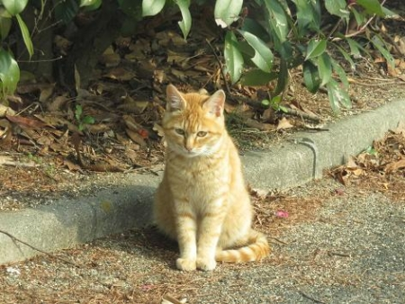 野良ネコと野鳥公園 011
