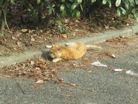 野良ネコと野鳥公園 029