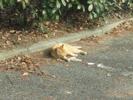 野良ネコと野鳥公園 025