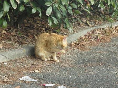 野良ネコと野鳥公園 023