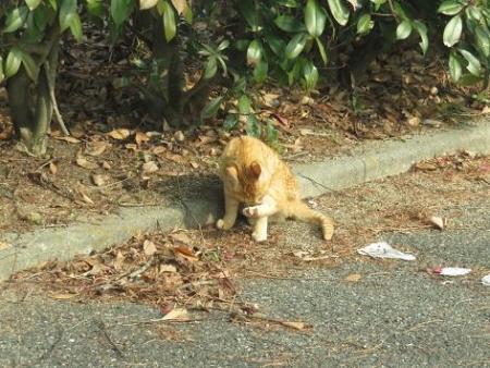 野良ネコと野鳥公園 031