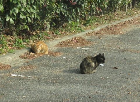 野良ネコと野鳥公園 040