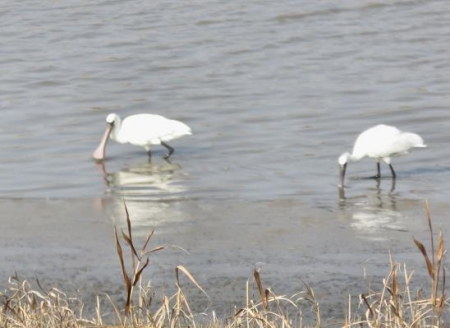 筑後川と百舌鳥 186