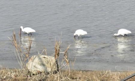 筑後川と百舌鳥 175