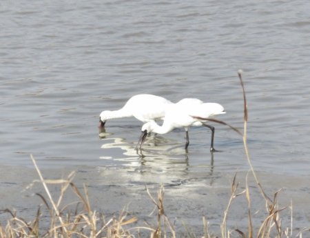 筑後川と百舌鳥 188