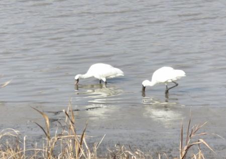 筑後川と百舌鳥 187