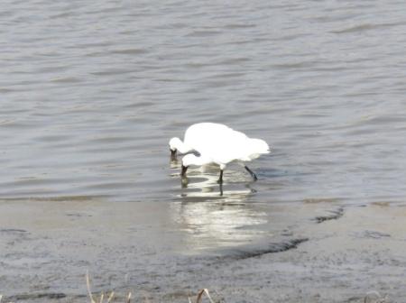 筑後川と百舌鳥 184