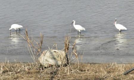 筑後川と百舌鳥 176