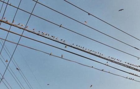 椋鳥とスズメ 034