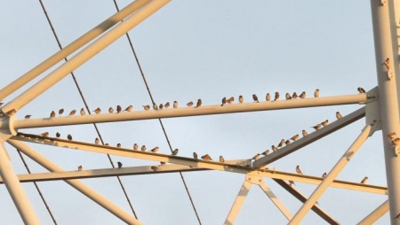 椋鳥とスズメ 038