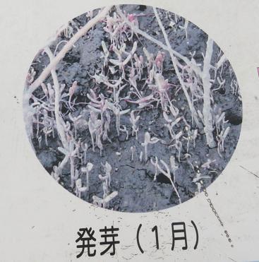 探鳥会 東与賀 326