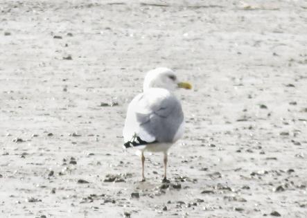 東与賀鳥 160