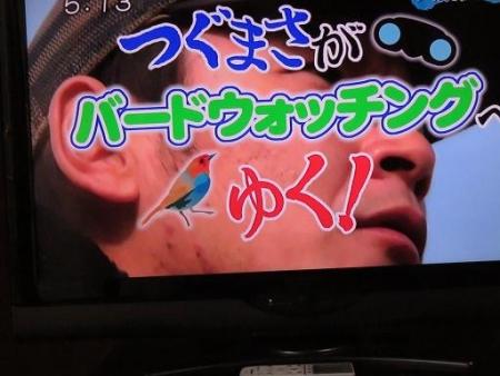 STSサガテレビ鳥 017