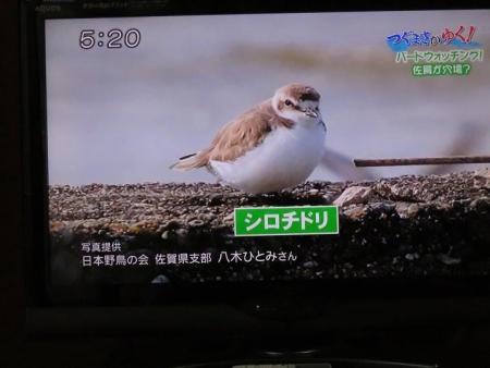 STSサガテレビ鳥 073