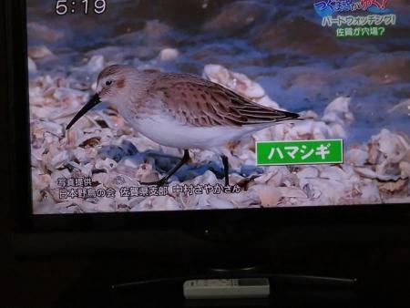 STSサガテレビ鳥 067