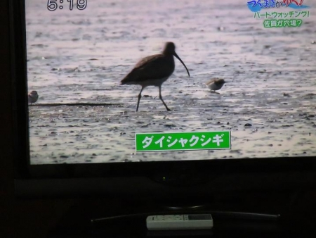 STSサガテレビ鳥 071