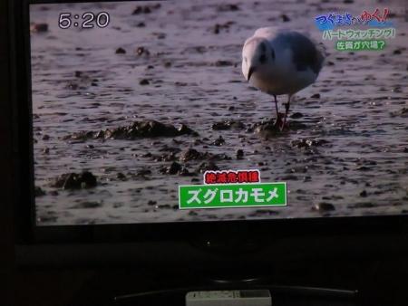 STSサガテレビ鳥 077
