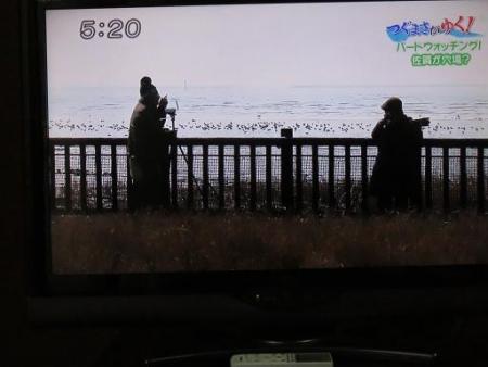 STSサガテレビ鳥 076
